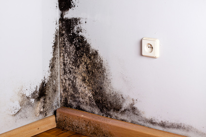 Black Mold Corner Home Testing Calgary In Your
