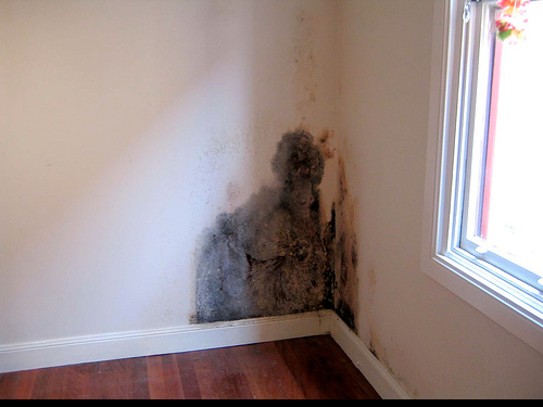 Image result for mold growth