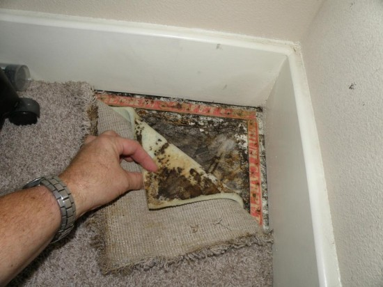 Mold inspection Calgary